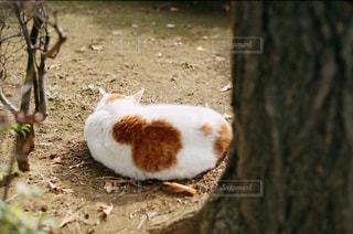 猫の背中の写真・画像素材[1812436]