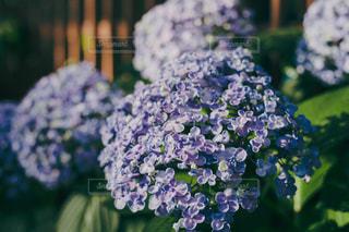 花のクローズアップの写真・画像素材[2217549]