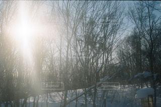 雪に覆われた野原の写真・画像素材[2889603]