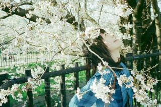 花園のクローズアップの写真・画像素材[3131497]