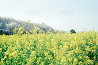 森の中の植物の写真・画像素材[3131498]