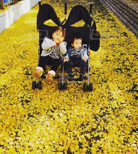 黄色の絨毯の写真・画像素材[1147686]