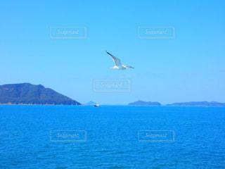 海とカモメ2の写真・画像素材[1148809]