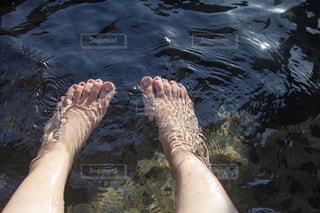 水中を泳ぐ動物の写真・画像素材[1147812]