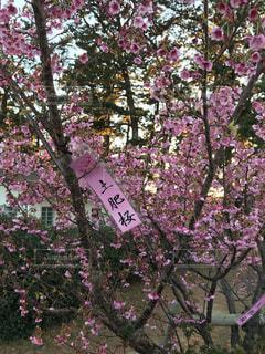 紫の花で道路標識 - No.1147900