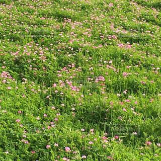 近くのお花畑 - No.1147918