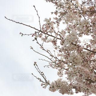 木の枝にとまった鳥 - No.1147926