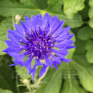 紫色の花 - No.1147937