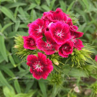 近くの花のアップ - No.1147938