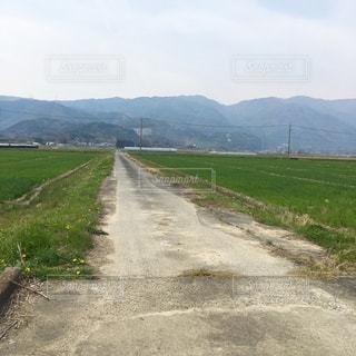 山の中腹に木と未舗装の道路 - No.1147939