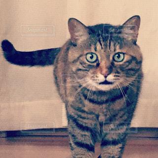カメラを見ている猫 - No.1147940