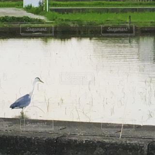 水の体の横に鳥立って - No.1147942