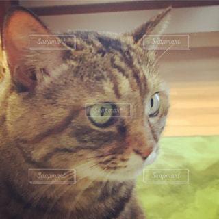 猫のアップ - No.1148132