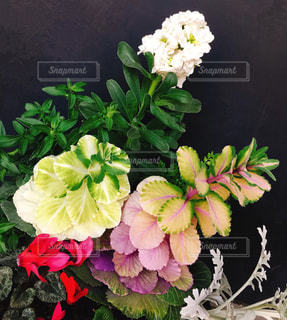 寄せ植えした花の写真・画像素材[1148391]