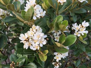 近くの花のアップの写真・画像素材[1150103]