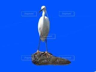 関東の野鳥の写真・画像素材[1176820]