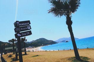 ヤシの木とビーチ - No.1148607