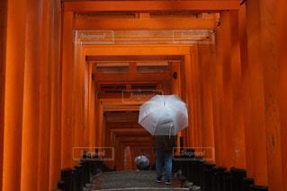 伏見稲荷雨の写真・画像素材[1150000]