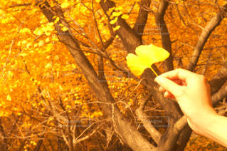 木の手の写真・画像素材[1150005]