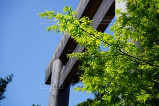 伊勢神宮の鳥居の写真・画像素材[1150041]