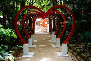 青島神社の写真・画像素材[1150051]