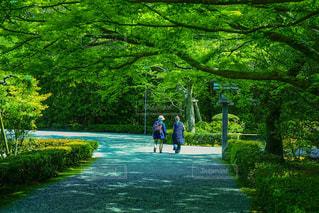 伊勢神宮の風景の写真・画像素材[1803935]