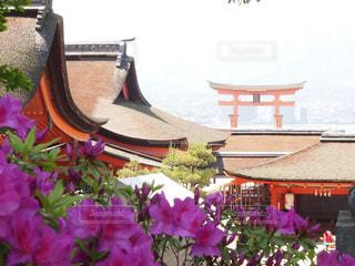 厳島神社の写真・画像素材[1156944]
