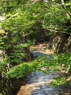 川のせせらぎの写真・画像素材[1437828]