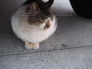 おすわり猫の写真・画像素材[1149002]