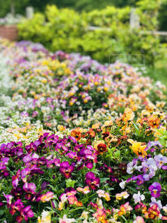 花の写真・画像素材[1208603]