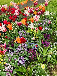フラワー ガーデンの写真・画像素材[1208660]
