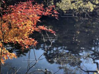 紅葉と湖の写真・画像素材[1593409]
