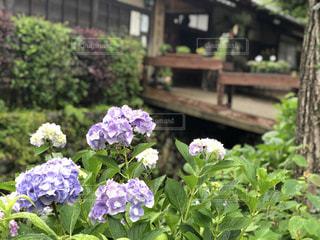 花の写真・画像素材[2261020]