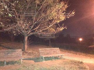 夜の公園の写真・画像素材[1150489]