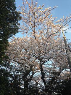 花 - No.696171