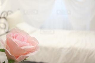 一輪の薔薇と白の空間の写真・画像素材[1149616]