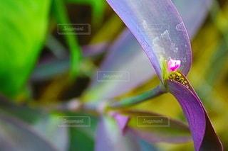花のクローズアップの写真・画像素材[3535249]