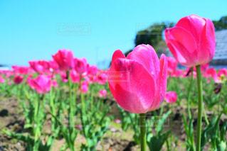 近くの花のアップの写真・画像素材[1149672]
