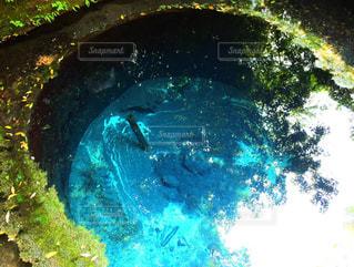柿田川湧き水の写真・画像素材[1428551]