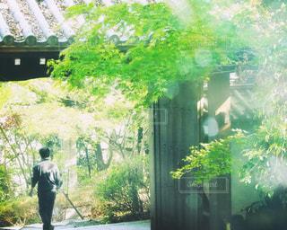ウィンドウの前に立っている人の写真・画像素材[1175745]