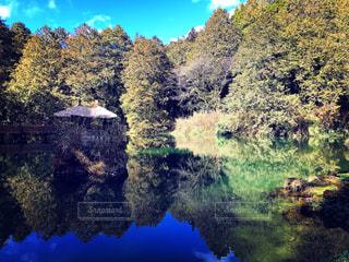 近くの木に囲まれた池のアップの写真・画像素材[1150646]