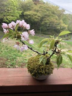 テーブルの上の花の花瓶の写真・画像素材[1150613]