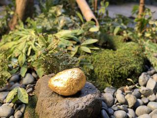 金の石!の写真・画像素材[1150731]