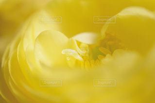 近くの花のアップの写真・画像素材[1151006]