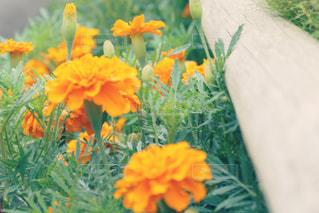 近くの花のアップ - No.1153058