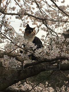 木の枝に猫の写真・画像素材[1151315]