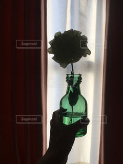 窓の前に座って花瓶の写真・画像素材[1154859]