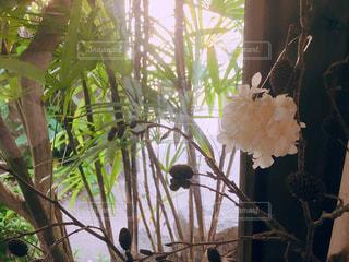 木の花の花瓶の写真・画像素材[1157471]