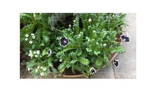 近くの植物のアップの写真・画像素材[1158408]