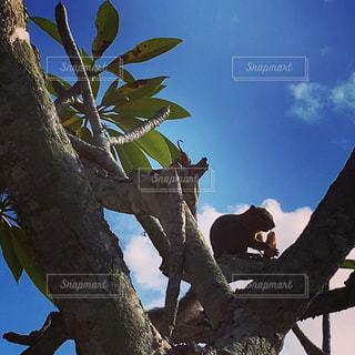 木の枝にとまった鳥の写真・画像素材[1259282]